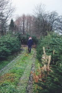 Rosendal Julemarked, Ålsgårde Denmark | Where to Find Christmas in Denmark via Oregon Girl Around the World