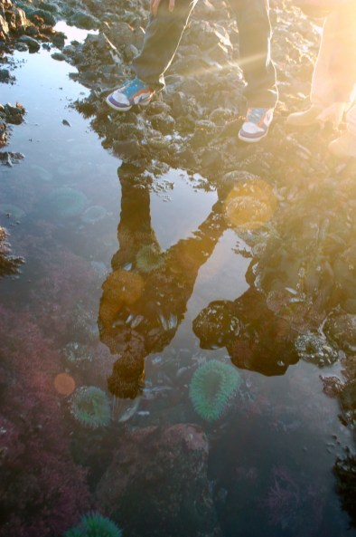 Reflection Tide Pool Erin Gustafson | Oregon Girl Around the World