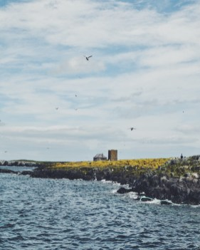 Farne Islands Northumberland UK Seabirds
