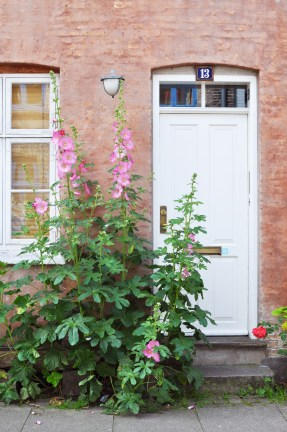 Hollyhocks signal a Copenhagen summer