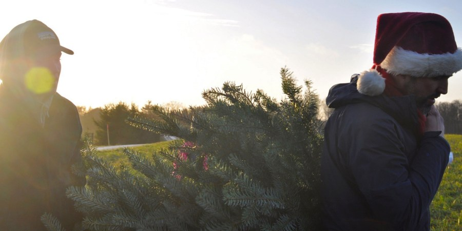 Denmark is Growing a Sustainable Christmas Season | Reasons to Choose an Organic Tree