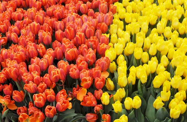 Where to Find the Flowers, Spring in Copenhagen | Oregon Girl Around the World