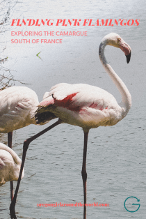 Finding Pink Flamingos in the Camargue Reginos | South of France | Oregon Girl Around the World