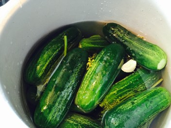 Be sure your pickles are below the brine.