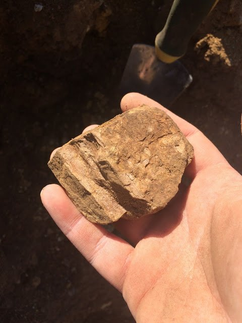 Rockhounding for petrified wood at Holleywood Ranch, Oregon