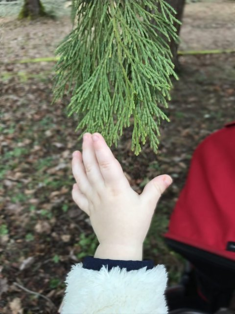 Baby touching leaves on winter walk with kids
