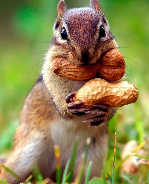Купить орехи сухофрукты с доставкой - Орехбург.рф ...