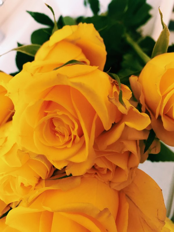 20-yellow-roses