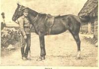 Сайт Оренбургского казачества: Казак и конь