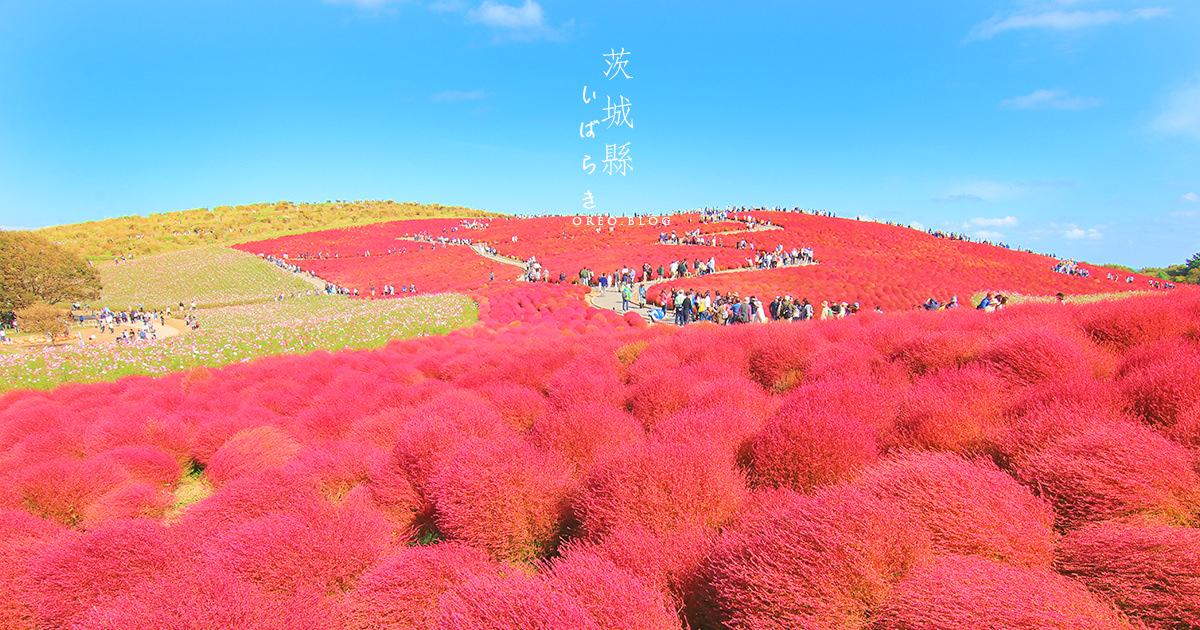 茨城 東京近郊~常陸海濱公園超治癒掃帚草球海~欣賞時間、交通、地圖