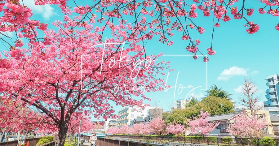 東京賞櫻景點 三月初的大橫川散步道河津櫻~人少好拍的小眾景點