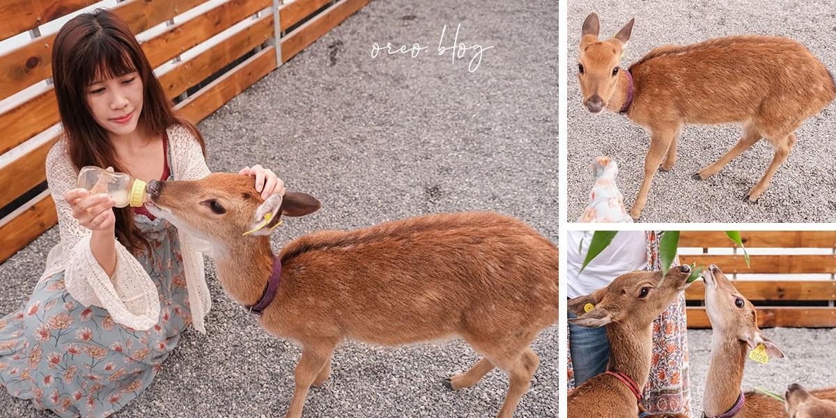 宜蘭景點 張美阿嬤農場~餵小鹿喝奶體驗~門票含餵草、餵奶、蔥油餅和紅茶!