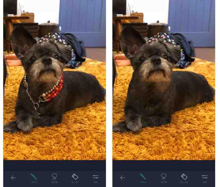 TouchRetouch使い方⑥の愛犬の画像