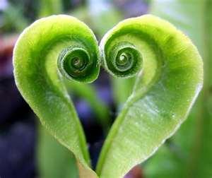 """Heart of Green Super Foods"""