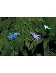 dragonfly solar lighting