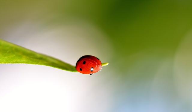 Grow pest free garden 2