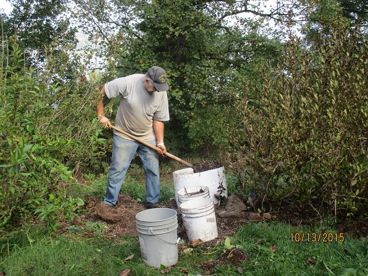 sweet potatoes digging up