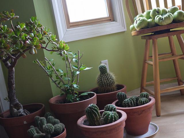 4 Cost Efficient DIY Methods for Green Living
