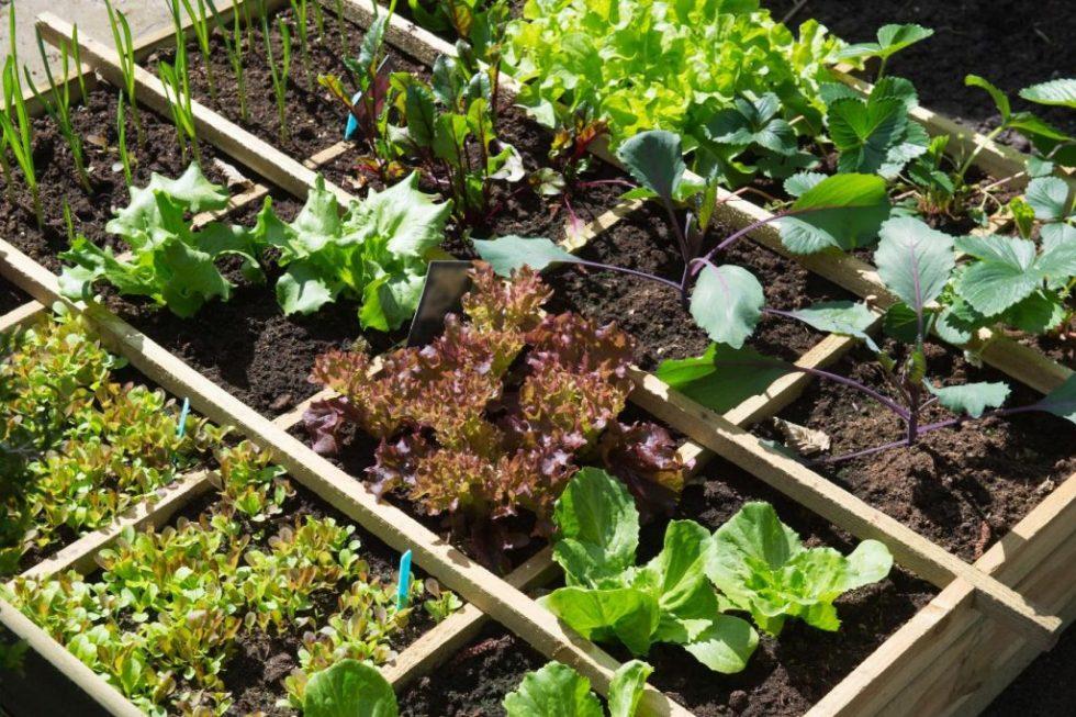 Starting plants