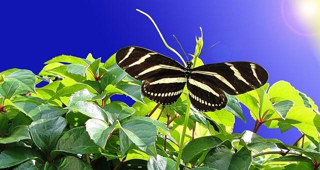 butterfly-993898_1280
