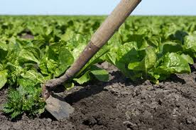 How to Keep Weeds out of Your Organic Garden