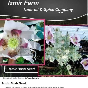 'Izmir Bush' Papaver Somniferum Poppy Seeds - Izmir Farms