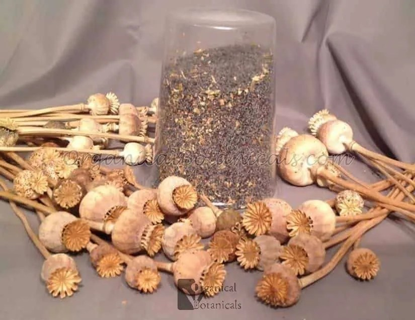 1lb. / 16oz. Unwashed BULK Papaver Somniferum Opium Poppy Seeds