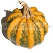 Tonda Padana Squash Seeds Organic Untreated