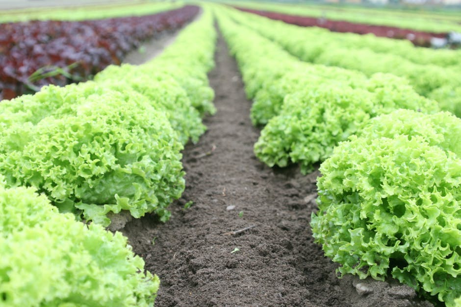 Methods of organic farming, organic and yourhealth