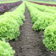 What are the methods of organic farming?