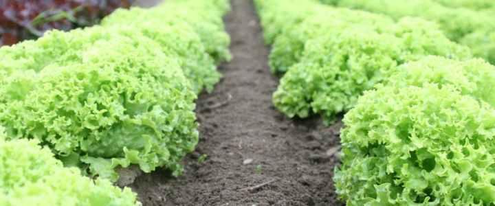 Methods of organic farming, organic and yourhealth