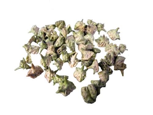 Hang Low Organic Chinese Herbs - Bai Ji Li