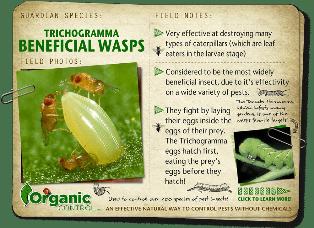 https://organiccontrol.com/beneficial-wasps/