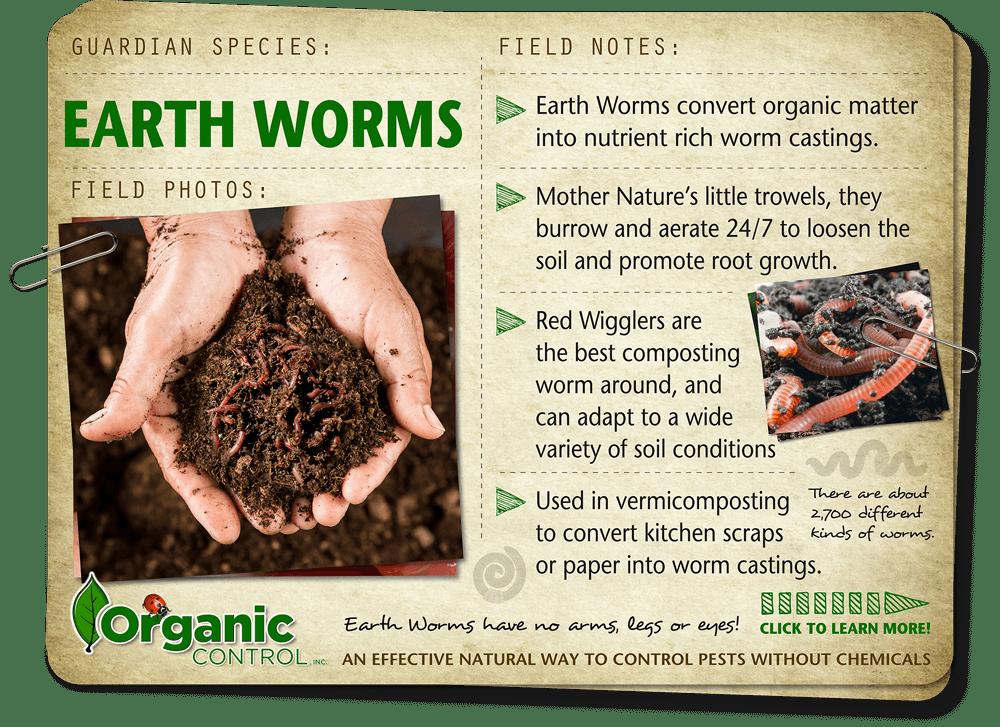https://organiccontrol.com/earthworms/