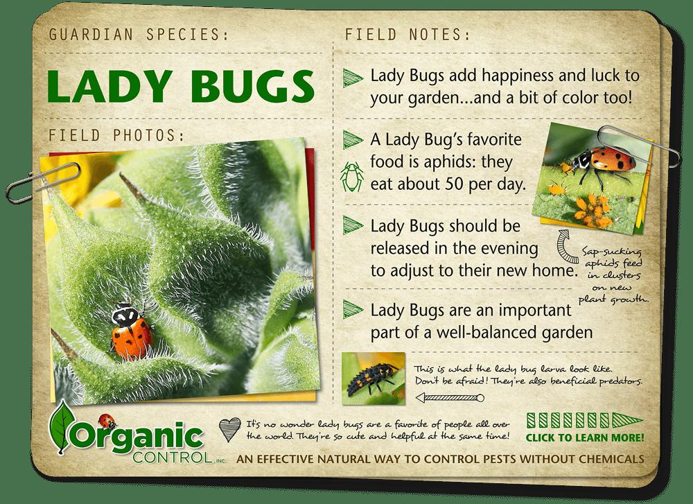 http://organiccontrol.com/lady-bugs/