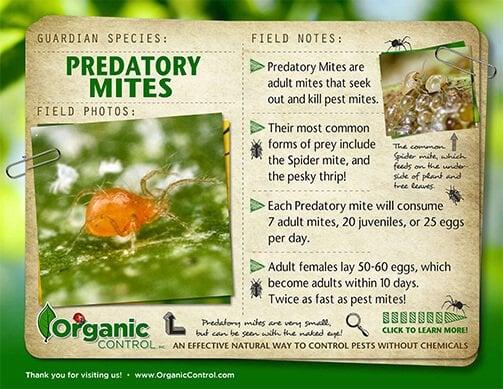 Predatory Mites - Organic Control, Inc