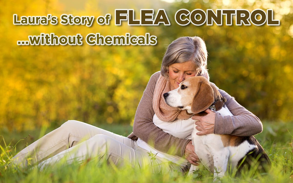 FLEA CONTROL…WITHOUT CHEMICALS