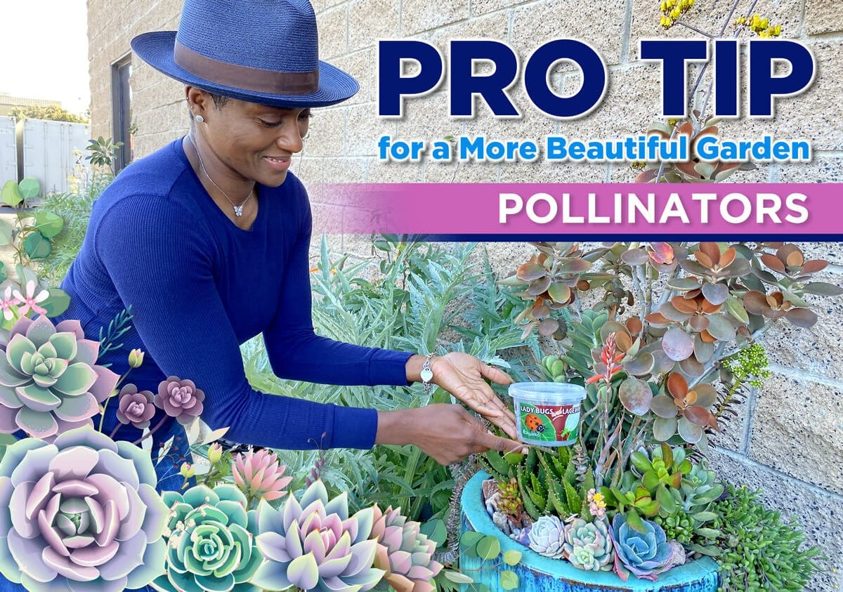 PRO TIP FOR A MORE BEAUTIFUL GARDEN: POLLINATORS