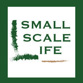 small scale life salsa contest