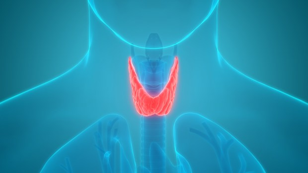 butterfly shaped thyroid gland at the front of your throat. Linda Downey- Organic Health Journey.
