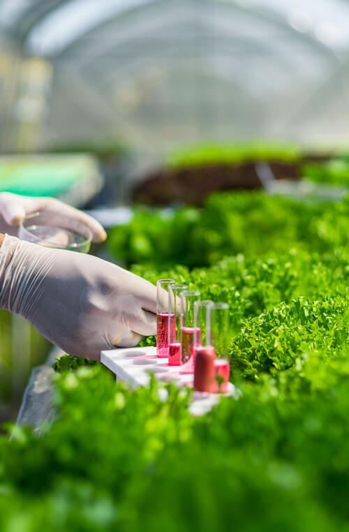 beakers containing red liquid in the middle of lettuce with a white gloved hand holding a dropper