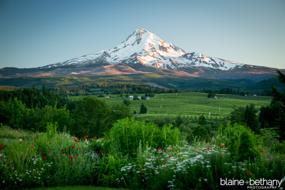 mt-hood-organic-farms-wedding-photographer-21 evening mountain garden