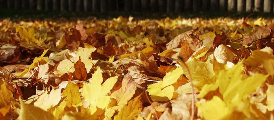 Mulch Leaves Or Bag Them