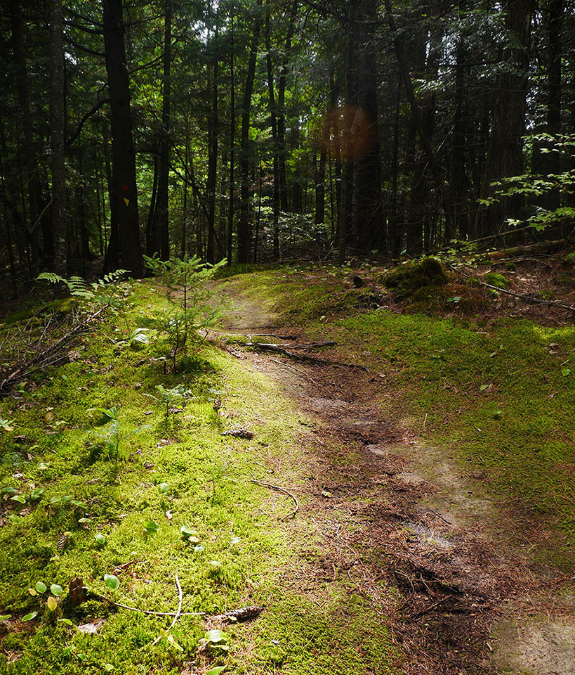 Bon Echo Provincial Park - Shield Trail