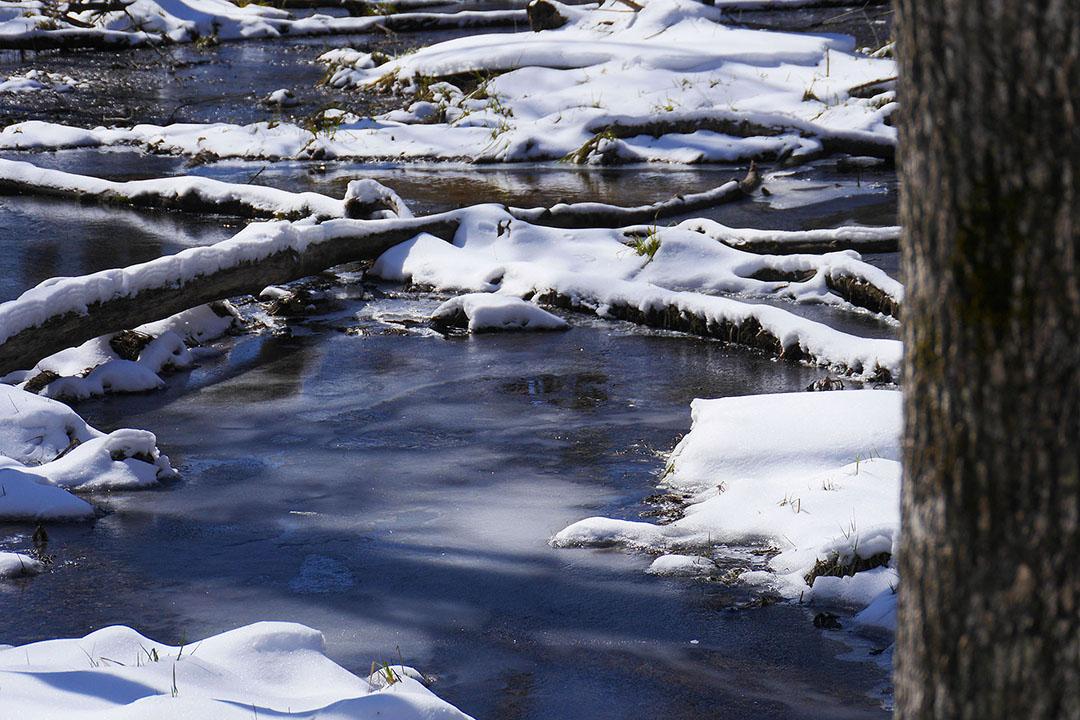 Frontenac Provincial Park - Boardwalk