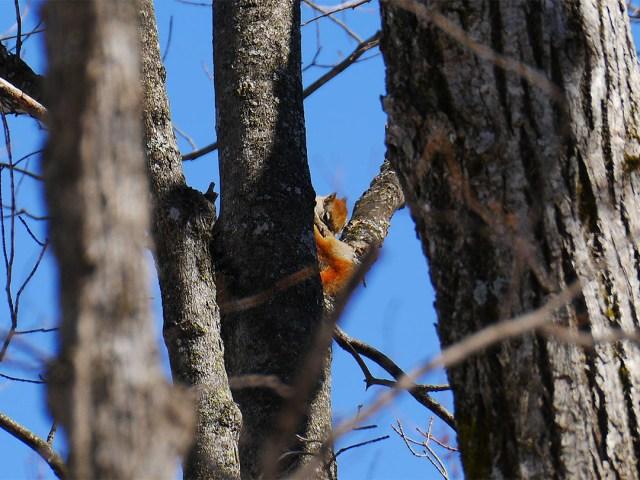 Frontenac Provincial Park - Red Squirrel