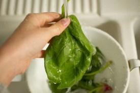Spinat gut waschen