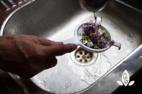 Gaensebluemchen waschen
