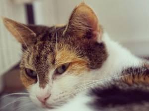 Närbild på katten Maja