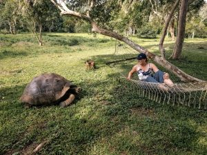 A woman sits on a hammock near a giant tortoise in the Galapagos